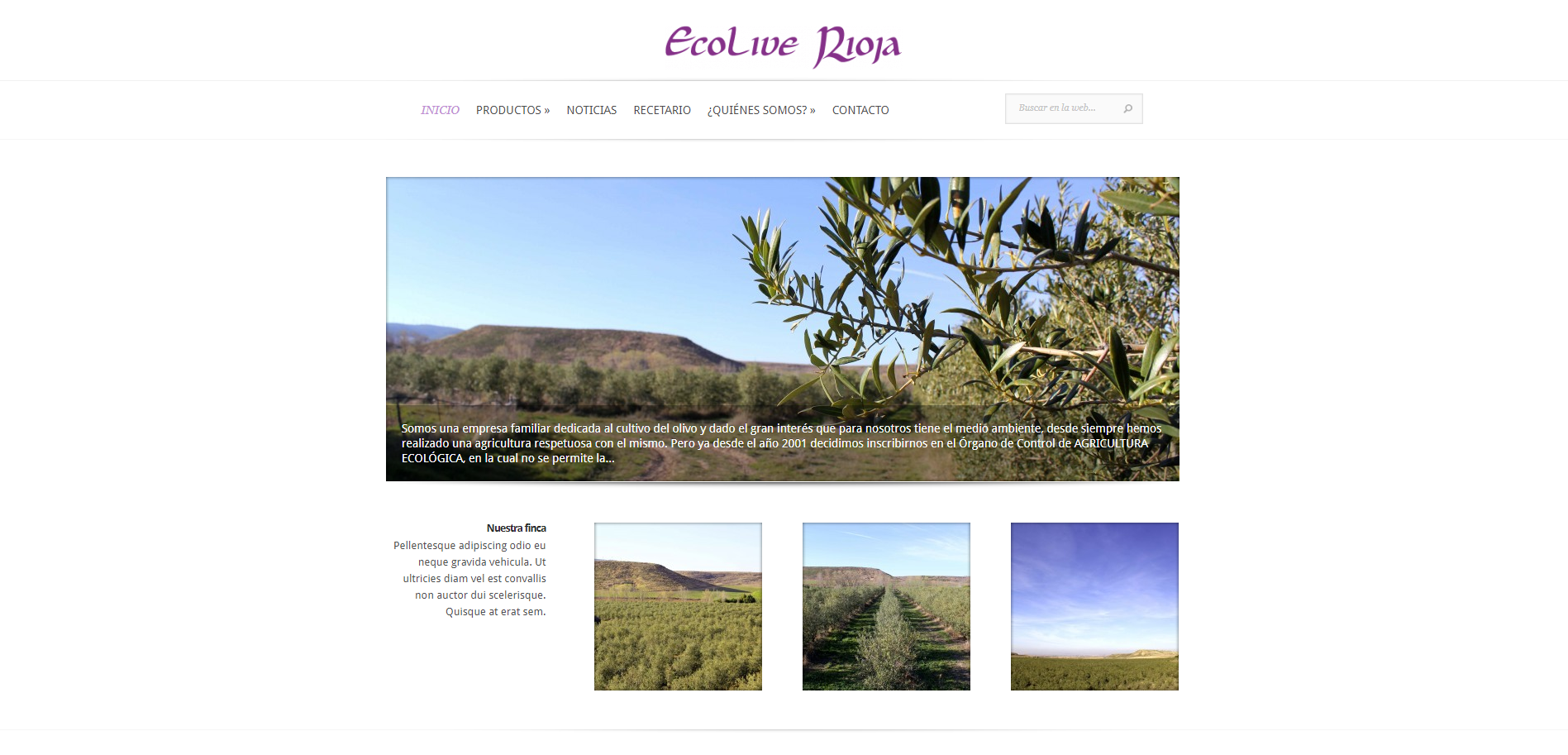 Diseño Web Ecolive Rioja